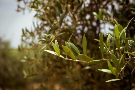 littlesilvergreen (1 de 1)